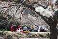 Gwangyang Maehwa Festival in Spring.jpg