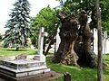 Hédervár-Árpád-fa és Gróf Khuen-Héderváry Károly és neje síremléke.JPG