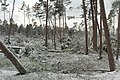 Hövelhof - Moosheide, Sturmschäden - 9.jpg