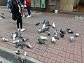 HK 中環 Central 德輔道中 39 Des Voeux Road Central 德忌利士街 Douglas Street freedom pigeons December 2019 SS2 04.jpg