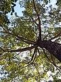 HK CWB 銅鑼灣 Causeway Bay 維多利亞公園 Victoria Park tree trunk n green leaves December 2019 SSG 44.jpg