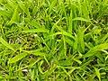 HK Central Edinburgh Place Memorial Garden green grass April 2021 SS2 01.jpg