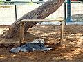 Ha'Yarkon Park (3083683759).jpg