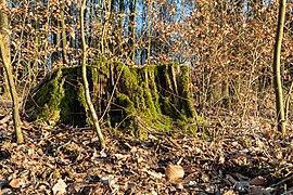 Haltern am See, Naturpark Hohe Mark -- 2018 -- 1309.jpg