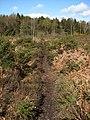 Heathland and woodland - geograph.org.uk - 760454.jpg