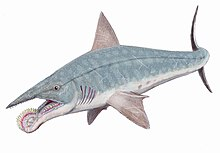 Helicoprion bessonovi1DB.jpg