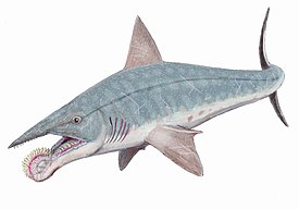 Helicoprion bessonovi