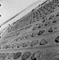 Helsingin olympialaiset 1952 - N210108 - hkm.HKMS000005-000001oy.jpg