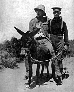 "New Zealand Defence Force - Lt. Richard Alexander ""Dick"" Henderson, New Zealand Medical Corps, carrying a wounded soldier on a donkey during the Battle of Gallipoli."