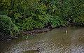Heron in the Boundary Channel (0016a35e-e628-4c3d-8254-946ebd96431e).jpg