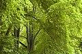 High Trees, Broadmayne - geograph.org.uk - 184413.jpg