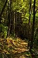 Hike (14894184298).jpg