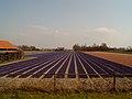 Hillegom, veld met hyacinthen 2007-03-25 14.59.JPG
