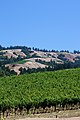 Hillside Vineyards in Anderson Valley.jpg