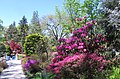 Hillwood Gardens in April (17597728555).jpg