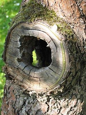 Hollow tree detail shot