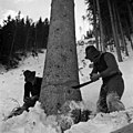 Holzfäller im Stockenboi-Graben, Kärnten (1952) OeNB 675208.jpg