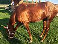 Horse 2528.jpg