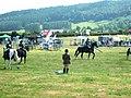 Horse class - geograph.org.uk - 917734.jpg
