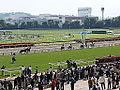 Horse racing @ Tokyo Race Course @ Fuchu (14117873172).jpg