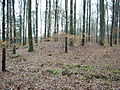 Huegelgrab Eppingen 3.jpg