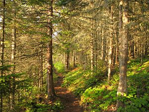 Isle Royale National Park - Tobin Harbor Trail through Laurentian Forest habitat, at sunset.