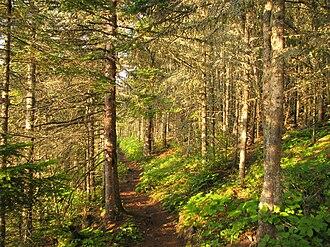 Isle Royale National Park - Tobin Harbor Trail through Laurentian Forest habitat, at sunset.