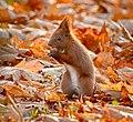 I like hazelnuts (22671600909).jpg