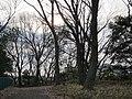 Ida-yama forest , Kawasaki - panoramio - Kaz Ish (10).jpg