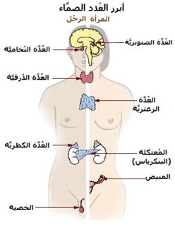 جهاز الغدد الصماء ويكيبيديا