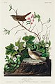 Illustration from Birds of America (1827) by John James Audubon, digitally enhanced by rawpixel-com 193.jpg