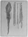 Indiansk huvudprydnad från Delaware i Nordamerika, 1600-talets första hälft - Skoklosters slott - 68734-negative.tif