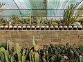 "Iran-qom-Cactus-The greenhouse of the thorn world گلخانه کاکتوس ""دنیای خار"" در روستای مبارک آباد قم- ایران 17.jpg"