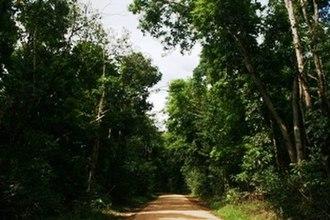 Kutini-Payamu (Iron Range) National Park - Iron Range National Park