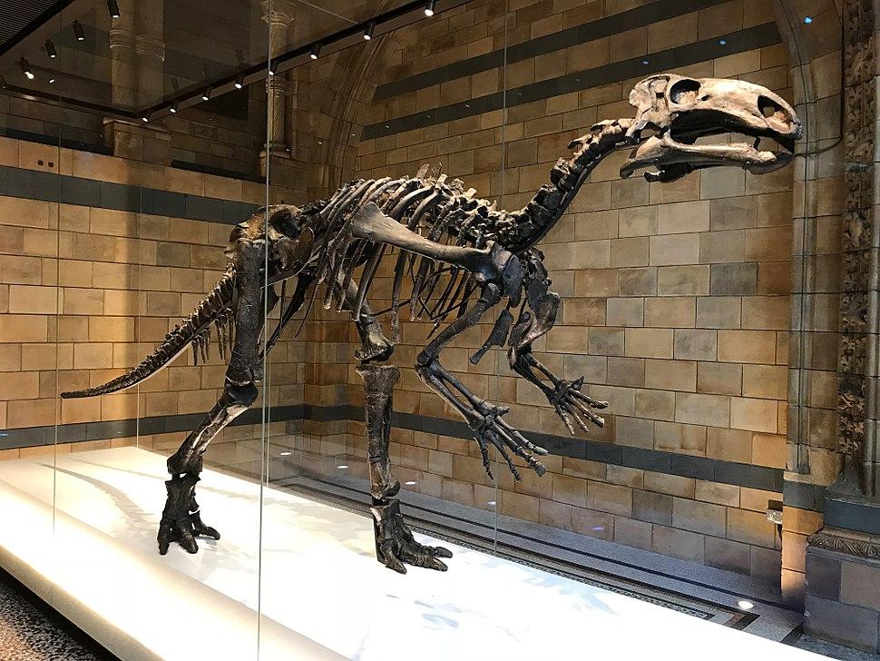 Isle of Wight Mantellisaurus