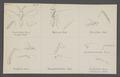 Isocratus - Print - Iconographia Zoologica - Special Collections University of Amsterdam - UBAINV0274 046 11 0015.tif