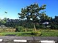 Jardim Mutinga, Barueri - São Paulo - panoramio (4).jpg