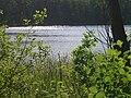 Jezioro Rząśniki.jpg