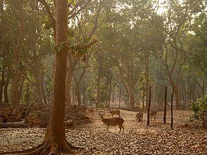 Jhargram - Jhargram Deer Park