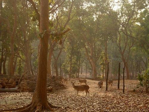 Jhargram Deer Park