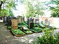 Judenfriedhof1MM.JPG