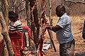 Kalanga man skinning a goat at the Domboshaba Cultural festival.jpg