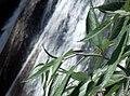 Kempty Falls 1.jpg