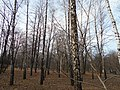 Khimselyshche, Cherkasy, Cherkas'ka oblast, Ukraine - panoramio (194).jpg