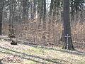 Klánovický les na východ od Klánovic 2904.jpg