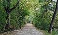 Kockelscheuer Luxembg forest 01.jpg