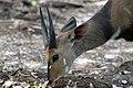 Kruger National Park, South Africa (14965841556).jpg