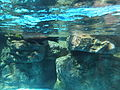 Kyoto Aquarium in 2013-5-2 No,39.JPG