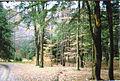 LRSP Woods.jpg