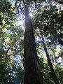 La Amistad Panama Biosphere Reserve - Parque Nacional Volcan Baru (a core zone) 23.JPG